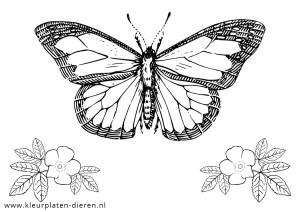 Kleurplaat Vlinder Kleurplaten Dierenkleurplaten Dieren