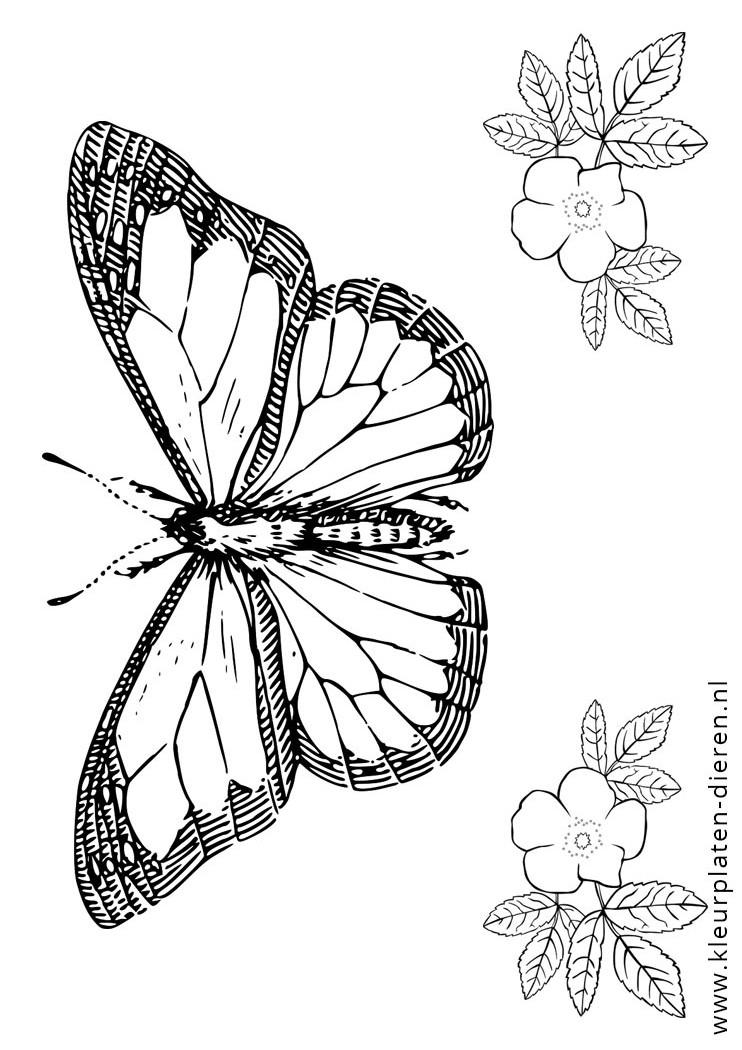 Kleurplaat Volwassenen Dieren Kleurplaat Vlinders Kleurplaten Dierenkleurplaten Dieren