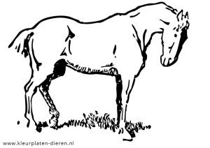Kleurplaten Paarden In Galop.Paarden Kleurplaten Kleurplaten Dierenkleurplaten Dieren