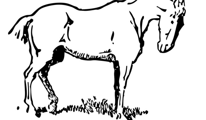 Paarden Archives Kleurplaten Dierenkleurplaten Dieren