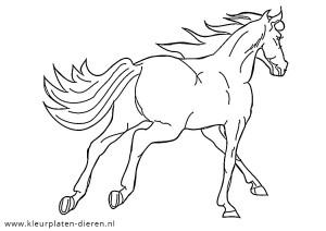 Kleurplaten Paard En Ruiter.Paarden Kleurplaten Kleurplaten Dierenkleurplaten Dieren