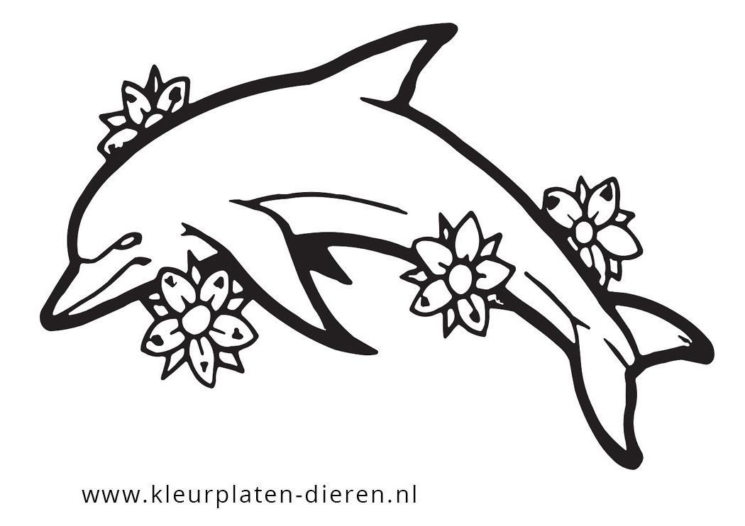 kleurplaat dolfijn kleurplaten dierenkleurplaten dieren